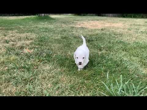 Milo at five weeks old
