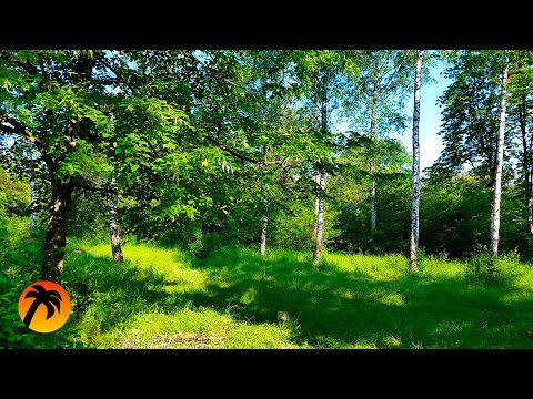 Spring Forest Sounds And Relaxing Bird Singing For Sleeping