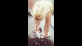 A Morte Do Pato Jurubeba Safado