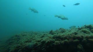 Глубокие скалы.  Рыбные места.  Подводная охота в Черном море.