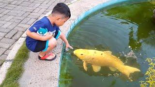 Download Lagu ikan makan es batu zefa vlog mp3