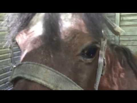 Gumbie - Miniature Horse Rescued From the...