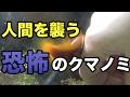 人間を襲う恐怖のクマノミ【海水魚水槽】 の動画、YouTube動画。