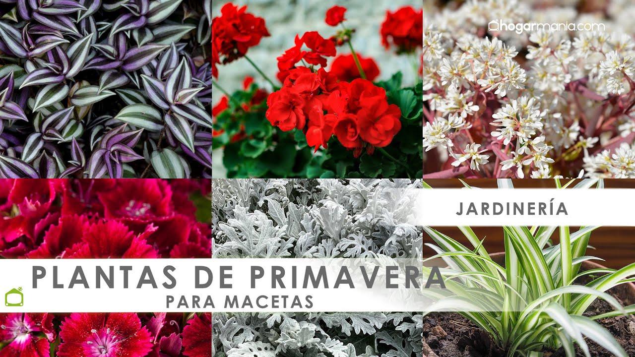 plantar plantas de primavera en macetas youtube