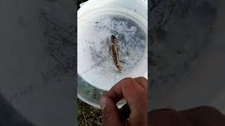 Рыбалка на судака Летом 2021
