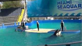 2012-11-10 - Miami Seaquarium Killer Whale Show (Part 1) [1080p]