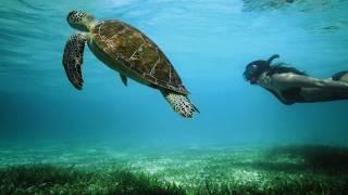 LG präsentiert:  Free Diving in neue Welten #FensterInEineAndereWelt