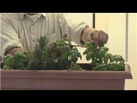Beginners' Gardening Tips : How to Maintain an Indoor Herb Garden