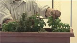 Beginners' Gardening Tips : How to Maintain an Indoor Herb Garden