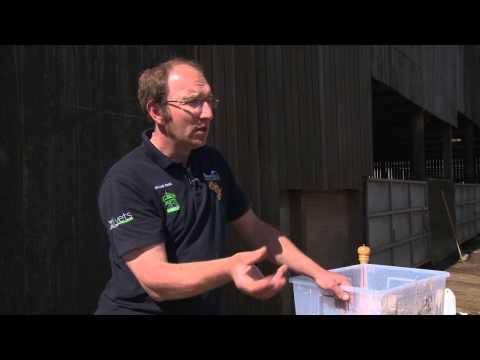 Cow Signals - Understanding the Rumen, Micheal Head