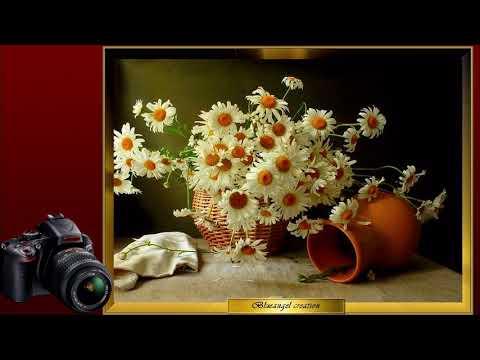 Julia Medvedev still life photography