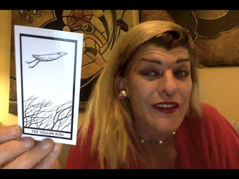 quick-fan-review-of-edward-gorey's-fantod-pack-with-madame-onça