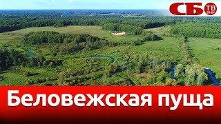 Беловежская пуща | новое видео с коптера