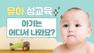 유아성교육_아이는 어디서 나와요?