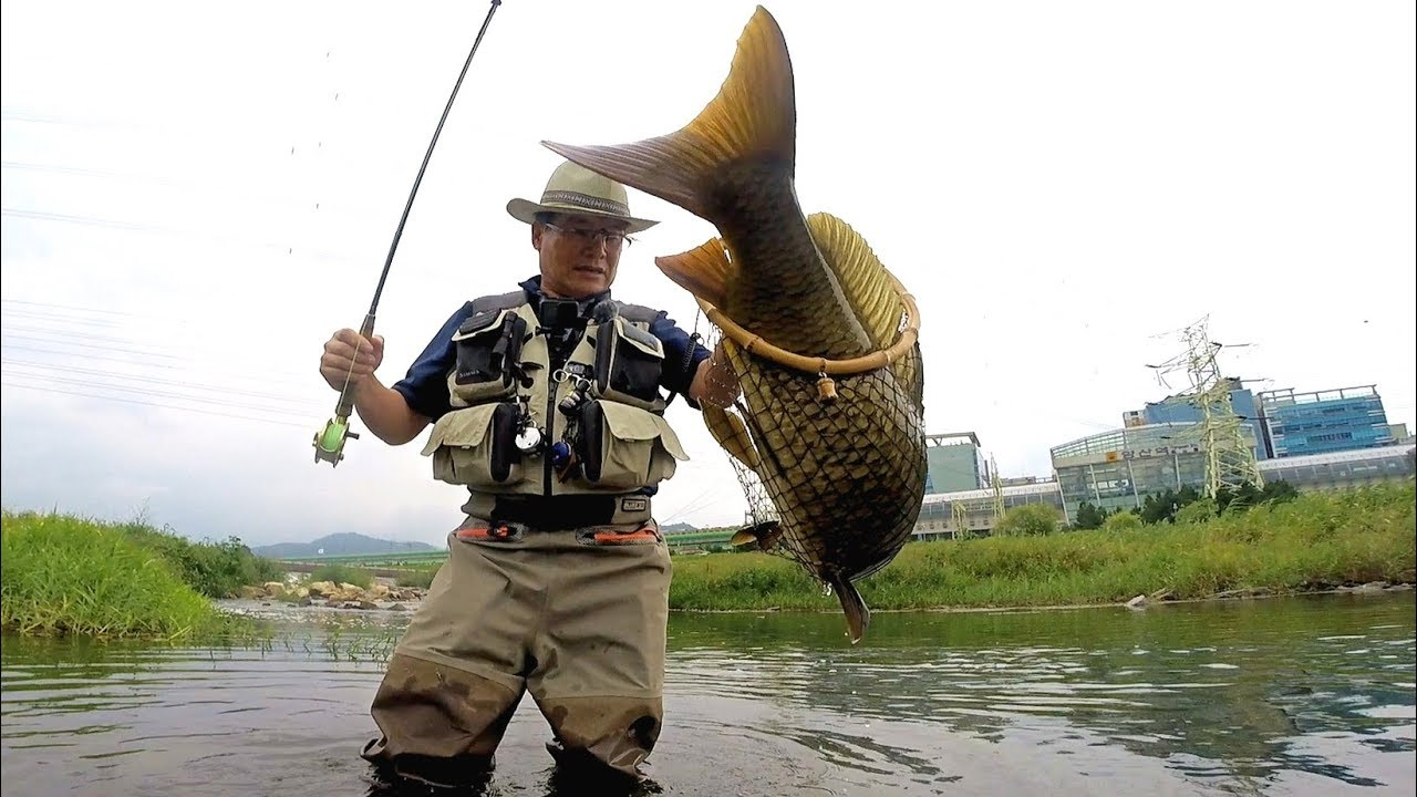 Fly fishing for Carp- Episode 10 (잉어 플라이낚시)