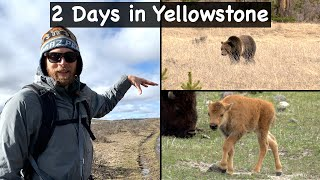 Visiting YELLOWSTONE National Park After Park Re-opens!