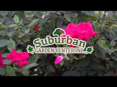 Suburban Nursery New City, New York | GotItLocal.com