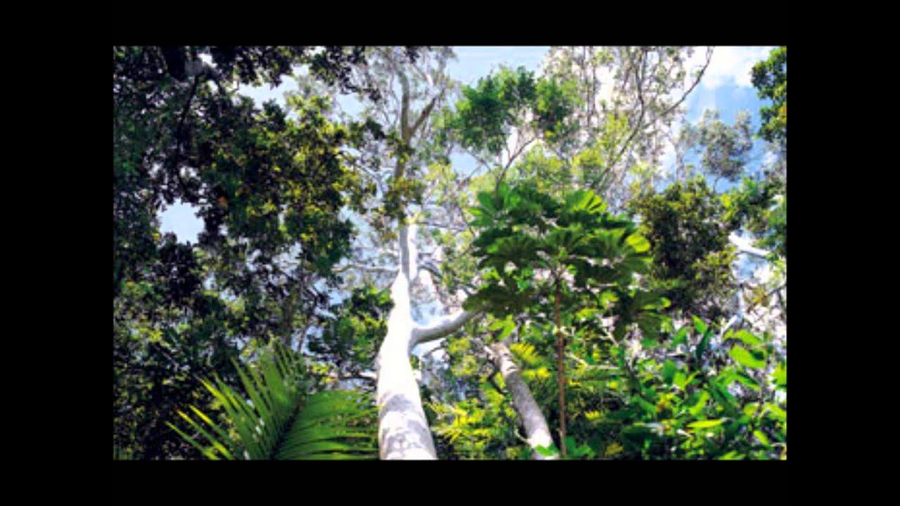 Amazon Rainforest Characteristics - YouTube