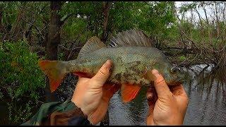 Хитрая рыбалка на севере, окуня по локоть