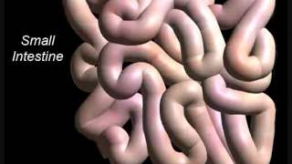 Call Me Maybe (Digestive System Parody)