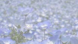ネモフィラの丘から ネモフィラの丘 検索動画 9