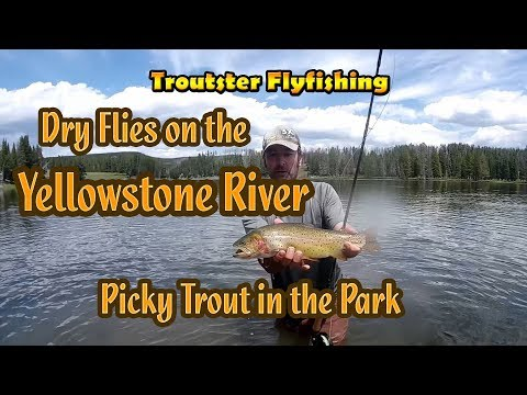 Flyfishing Yellowstone River in the National Park - Sight Fishing Big Cutthroat Trout