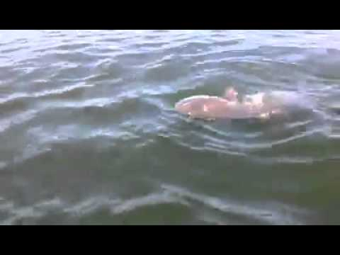 MASSHOLE GOES INSANE OVER A BIG FISH!  IT'S A BABY FU**ING WHALE..... OR IS IT?  PART 1