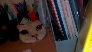 Сравниваем корма Whiskas и Friskies\коты\котята