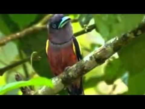 birds and animals hd wallpaper youtube original
