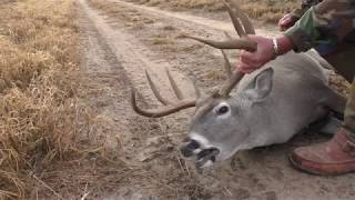 Whitetail Buck Survives 7mm mag Round To The NECK!!!