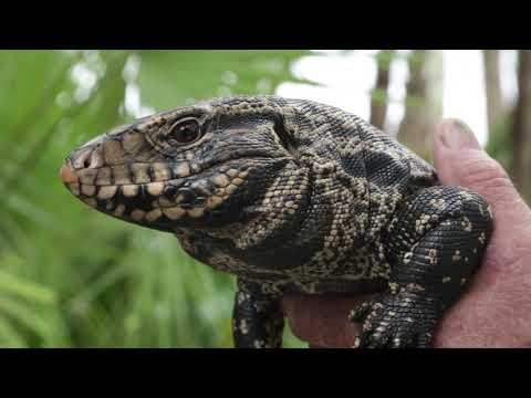 Invasive Species Of Florida - Documentary [HD]