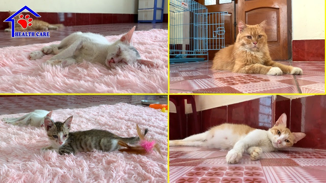 Baby kittens and Cats Sleep with daddy kitten - Cat's House Live