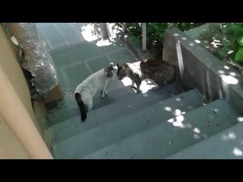ANGRY  CATS /FIGHT CATS/COMPILATION