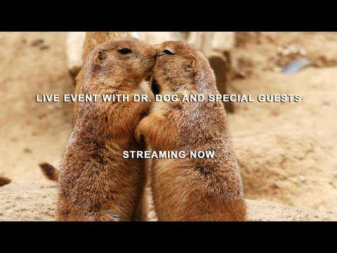 Dr. Dog B-Room Album Release Stream