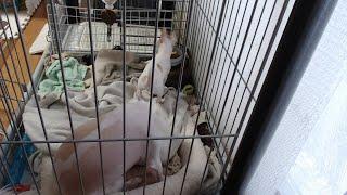 名前はりゅうでオス(去勢済)です。2月3日が誕生日です。犬色 パーティ...