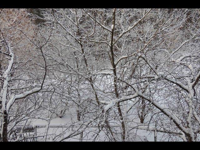 Это просто зима - Песни под гитару и реально репортажи  - Алексей Доктор Леший -  бард