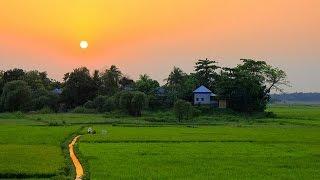 আমাদের গ্রাম (আলীপুর)  An Aerial Video of our Beautiful Village in Bangladesh. DJI Phantom 3 👍🚁✌😁