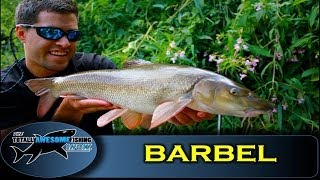 Barbel fishing tips- Maggots & Swimfeeder - Totally Awesome Fishing Show