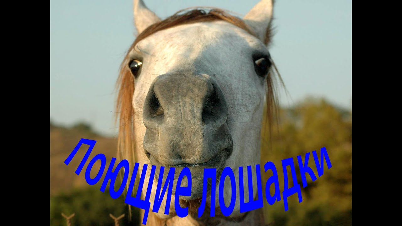 нимфа поющая лошадь открытка если