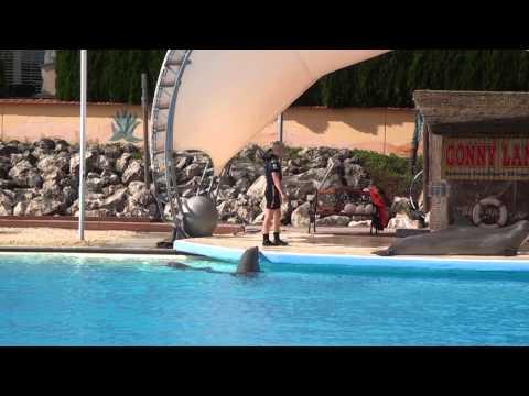 Conny-Land Dolphin Show (1)
