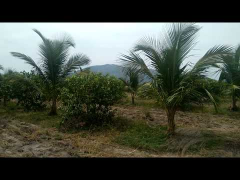 Organic Agri Land for Sale - 25 acres.