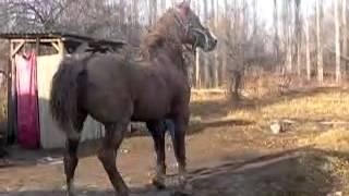 самый красивый конь барон