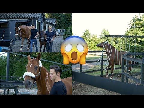 DRESSAGE HORSE TRIES WALKER PART 1|| MATT HARNACKE