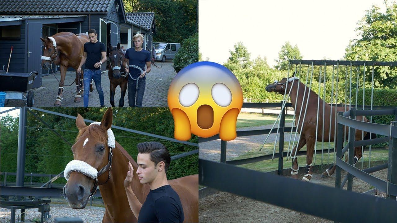 dressage-horse-tries-walker-part-1-matt-harnacke