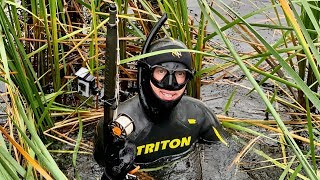 Осенняя подводная охота на ВОЛГЕ Судаки окуни щуки