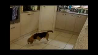 Termite Inspection Gold Coast | Mack The Termite Detection Dog