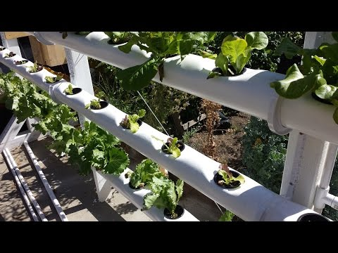 Grow your own lettuce in a vertical hydroponic system