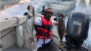 Fishing in the Bay Area|Halibut and Striped Bass biting crazy