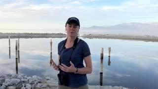 Video Salton Sea update with Andrea Jones download MP3, 3GP, MP4, WEBM, AVI, FLV November 2017