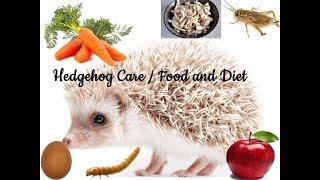 HEDGEHOG CARE FOOD AND DIET